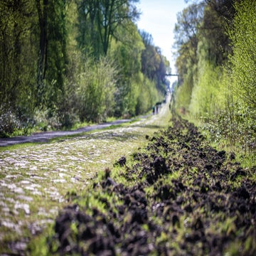 Pro consensus: 'A tailwind makes Roubaix harder'